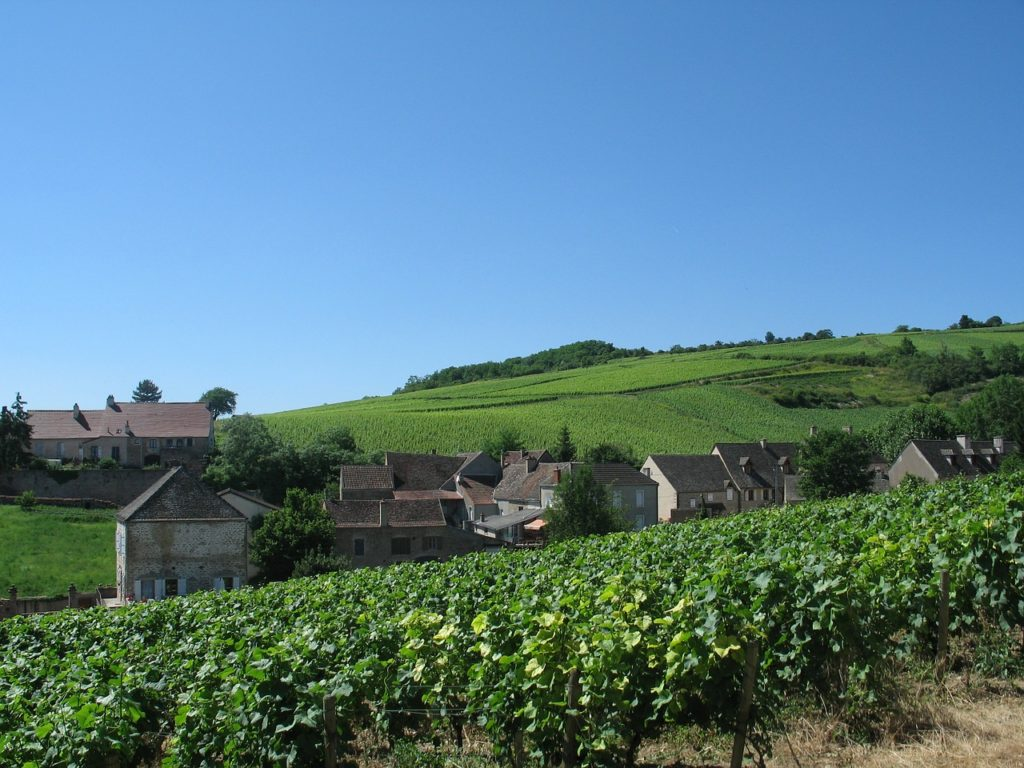 Burgundy France vineyard
